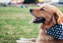 Get-Strongest-and-Top-Dog-Breeds-of-the-World-Right-Now-on-expertview-online